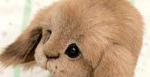 Teddy rabbit / зайки тедди