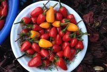 Ingredientes prehispánicos / by Gastrotour Prehispánico Malinalco