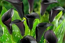 Basic Black / by Evelyn Moreau