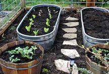 Gardening 101 / by Natasha Baker,CD,PCD(DONA)
