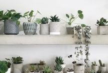 Inspired Plants + Containers / Our plant & container inspiration perfect for the home, garden, & outdoor living.
