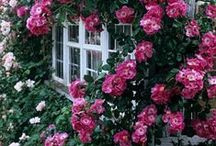 Flowers and Gardens / Beautiful #flowers and #gardens!