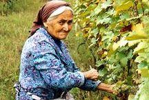 SGC Inspiration: Vineyards