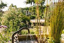 Our Garden Details