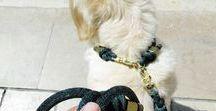 """Dog Collar - Collier """"F'Dog"""""""