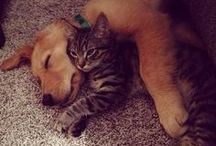 gatitos y perritos