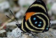butterflies - mantis - moths / by Millie Coquis