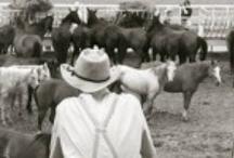 Cowboys / by Megan Oteri