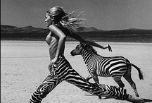 stripes / by Millie Coquis