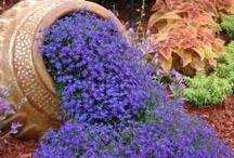 life  |  gardening