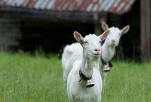 life  |  on the farm