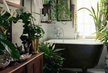 obsessed: plants in spaces. / green, hanging, home, houseplants, gardening....all plants in all spaces.