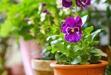 Plantes / Pots / Indoor / Outdoor