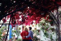 #Patios2015 #MagicEurostars / ¡Comparte en Instagram tu mejor foto de Córdoba y el festival de Los Patios y consigue una estancia en el Eurostars que prefieras! http://bit.ly/1JO647h / by Eurostars Hotels