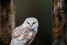 Animals | Owls