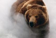 Animals | Bears