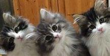 Cute Animals =)