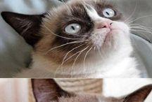 Grumpy cat / Para mi gato gruñón favorito