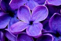 Violet - Purple / Du violet !  Purple
