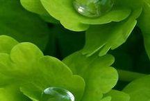Vert - Green / Vert - Green - inspiration, créations, déco, DIY, photos
