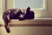 PETS -  / ** best friends ** / by Nancy Osorio
