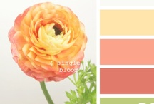 color boards / by Details Weddings & Events