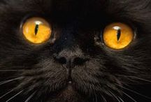 Black Cats / by Penny McGahen