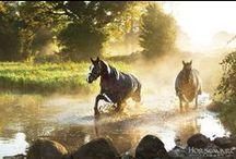 We ♥ horses / by Horseware