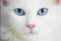 White Cats / by Penny McGahen