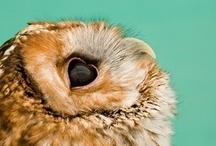 Owl always love owls / by Kelly Goebel