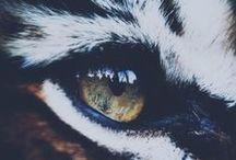 Cats - Pets - Animals / by Mercedes Palacios