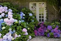 gardening / by Jennie Akins