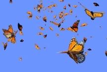 Monarchs / by Kelly Goebel