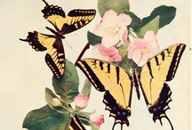 Papillon / Boring book, beautiful insects....