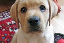 Sucker for cute dog pics / by Cari Fennell