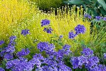 Garden / by Debra Wickham