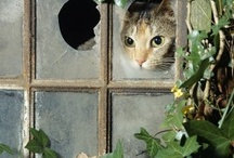 Cute... / by Norma Karmann Parisan