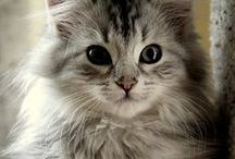 ♥ Felines ♥ / Cats, cats and more cats