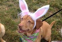 stl's biggest pet easter egg hunt - 2013 / each spring, treats unleashed ladue hosts an egg-citing easter egg hunt on the lawn. in 2013, more than 300 dogs and their families came out for the event, which raised more than $1,500 for the rescued racers greyhound rescue group. THANK YOU to everyone who came out!