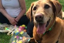stl's biggest pet easter egg hunt - 2014 / each spring, treats unleashed ladue hosts an egg-citing easter egg hunt on the lawn. in 2014, we had twice the fun with hunts at 11 am and 3 pm. more than 250 dogs and their families came out for the event, which raised more than $1,700 for the rescued racers greyhound rescue group. THANK YOU to everyone who came out!