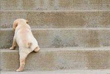 Puppies / by Maraca FS