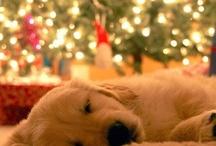 Christmas! / by Stephanie Phillips