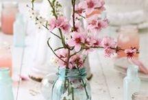 Flowers & plant