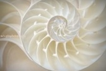 """Spirals for the spirit / """"The whole universe is based on rhythms. Everything happens in circles, in spirals.""""  ~John Hartford"""