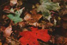 Seasons / by Danielle Fontana