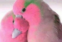 Beautiful Birds / Beautiful birds and bird products and gifts