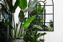 ★ Indoor Plant Inspo ★ / Indoor plant inspiration for my home