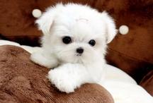 Cute Pets / Cute, little, furry friends