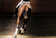 Horses / by Kaley Adams