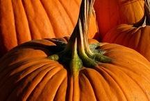 Halloweenie / by Nikki Murgz